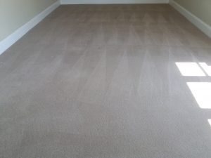 show home carpet cleaners oxford